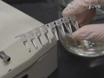 Dissezione di cuore in larvale, Zebrafish giovanile e degli adulti,<em> Danio rerio</em thumbnail