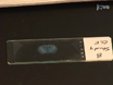 Med hjälp av en jämförande Arter metoden för att undersöka neurobiologi av Paternal svar thumbnail