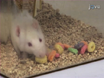 Acute and Chronic Tactile Sensory Testing after Spinal Cord Injury in Rats thumbnail