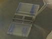 Alginat Microcapsule som en 3D-plattform for Formering og Differensiering av humane embryonale stamceller (hESC) til ulike linjene thumbnail