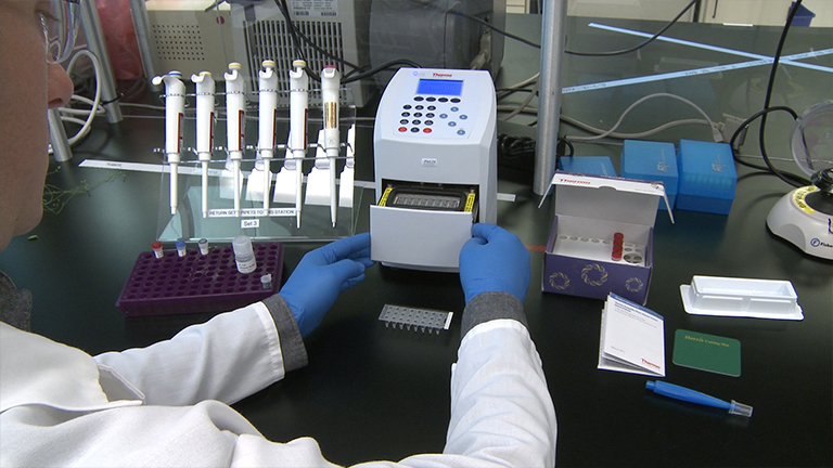 Genotyping of Plant and Animal Samples without Prior DNA Purification