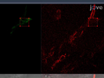 A Faster, High Resolution, mtPA-GFP-based Mitochondrial Fusion Assay Acquiring Kinetic Data of Multiple Cells in Parallel Using Confocal Microscopy thumbnail