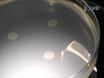 Een semi-kwantitatieve benadering van biofilmvorming Met behulp van Gerimpelde Colony ontwikkeling te beoordelen thumbnail