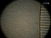ניתוח הדמיה של תא עצב לאינטראקצית גליה בפלטפורמת תרבות Microfluidic (MCP)-מבוסס אקסון העצבי ומערכת גליה שיתוף תרבות thumbnail