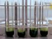 脂肪酸组分和含量微藻分析 thumbnail