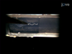 쥐과 장내 신경 전구 세포에 대한 양이 세포 이동의 분석 thumbnail