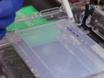 Multiplex PCR Assay for Typing of Staphylococcal Cassette Chromosome Mec Types I to V in Methicillin-resistant <em>Staphylococcus aureus</em> thumbnail