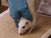 Assessing Forelimb Function after Unilateral Cervical SCI using Novel Tasks: Limb Step-alternation, Postural Instability and Pasta Handling thumbnail