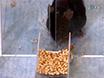 Study Motor Skill Learning by Single-pellet Reaching Tasks in Mice thumbnail