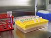 Indagare interazioni proteina-proteina in cellule vive utilizzando il trasferimento bioluminescenza Resonance Energy thumbnail