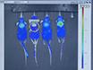 Cerenkov Luminescence Imaging af interscapular brunt fedtvæv thumbnail
