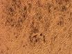 Ableiten Retinapigmentepithel (RPE) von induzierten pluripotenten Stammzellen (iPS-Zellen) von verschiedenen Größen von Embryoidkörpern thumbnail