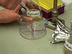 작은 볼륨 생물 검정은 물 - 펄스 진폭 변조 (WATER-PAM) 형광 측정을 사용하여 세균 / 식물 플랑크톤의 공동 문화를 평가하는 thumbnail