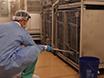 Karakterisering av Metabolsk Status i humane primater med intravenøs glukosetoleransetest thumbnail