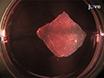 العدوى <em>فيفو السابقين</em> الفئران البشرة مع فيروس الهربس البسيط من النوع 1 thumbnail