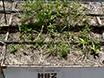 En CO<sub&gt; 2</sub&gt; Koncentrationsgradient Facility for Testing CO<sub&gt; 2</sub&gt; Anrikning och Jord Effekter på Grass Ecosystem Funktion thumbnail