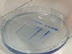 Gradient Santrifüj tarafından İnfluenza A Virüsü Kapsidlerin <em>Vitro</em> Demontaj <em>içinde</em> thumbnail