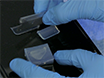 Decellularized 폐 공사장 공중 발판을 사용하여 ESC 파생 마우스기도 상피 세포의 생성 thumbnail