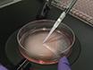הגנום עריכה בימוי בידול של hPSCs עבור חקירת גורמים המשפיעים Lineage בהתפתחות האנושית הלבלב thumbnail