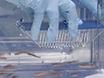 Environmental Screening of <em>Aeromonas hydrophila</em>, <em>Mycobacterium</em> spp., and <em>Pseudocapillaria tomentosa</em> in Zebrafish Systems thumbnail