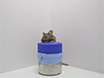 Novel Object Recognition Test for the Investigation of Learning and Memory in Mice thumbnail