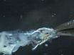 Long-term Live Imaging of <em>Drosophila</em> Eye Disc thumbnail