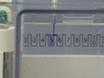 קביעת הביטוי משטח תאים ושיעור אנדוציטי של חלבונים בתרבויות אסטרוציטיות ראשוניות באמצעות Biotinylation thumbnail