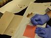 A Computational Method to Quantify Fly Circadian Activity thumbnail
