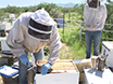 Monitoring Colony-level Effects of Sublethal Pesticide Exposure on Honey Bees thumbnail