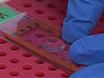 Method for Labeling Transcripts in Individual <em>Escherichia coli</em> Cells for Single-molecule Fluorescence <em>In Situ</em> Hybridization Experiments thumbnail