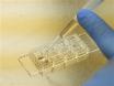 <em>Ex Utero</em> Electroporation and Organotypic Slice Cultures of Embryonic Mouse Brains for Live-Imaging of Migrating GABAergic Interneurons thumbnail
