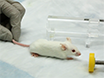 Assessment of Respiratory Function in Conscious Mice by Double-chamber Plethysmography thumbnail