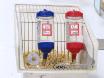 Kronik vurguladı fareler üzerindeki Xiaoyaosan anti-depresyon etkisini değerlendirmek thumbnail