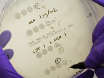 Antimicrobial Synergy Testing by the Inkjet Printer-assisted Automated Checkerboard Array and the Manual Time-kill Method thumbnail