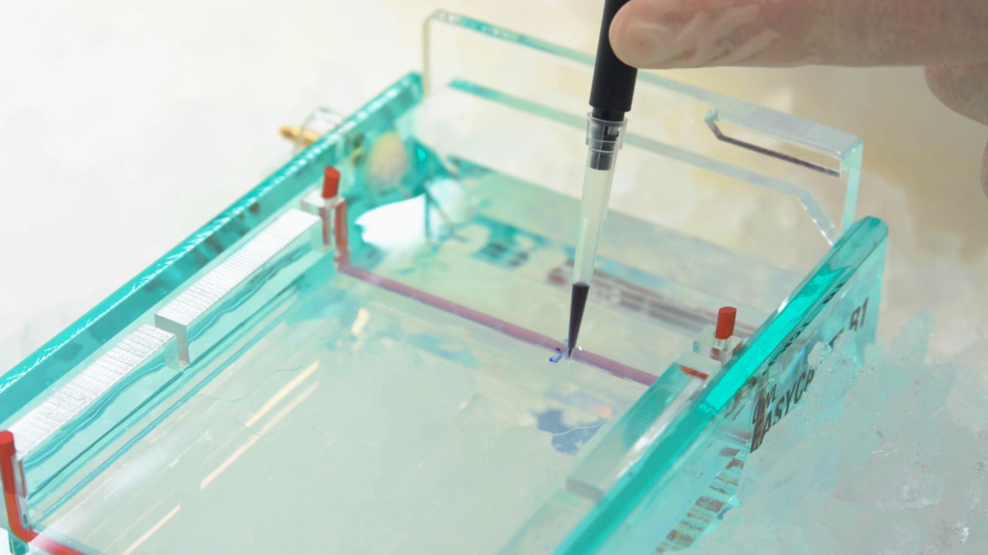Montage von Gold Laptops in chiralen plasmonische Metamolecules mit DNA Origami Vorlagen thumbnail