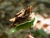Leaf Area Index Estimation Using Three Distinct Methods in Pure Deciduous Stands thumbnail